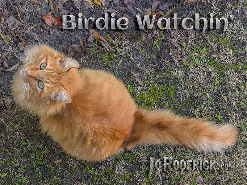 Birdie Watchin' by Jo Roderick